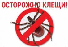 О «горячей линии» по профилактике клещевых инфекций.